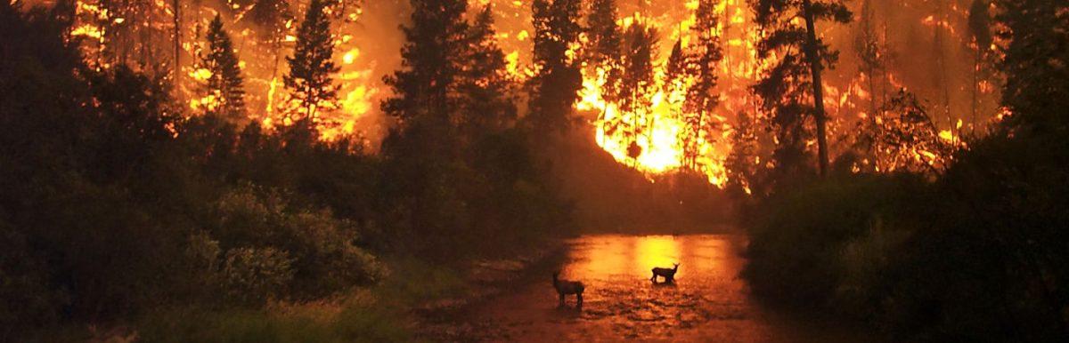 Πολιτική προστασία Μαραθώνα - Πυρκαγιές
