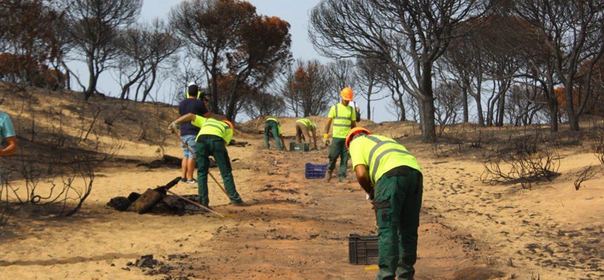 Πρόσληψη εργατών δασοπυροπροστασίας - δασοπυρόσβεσης